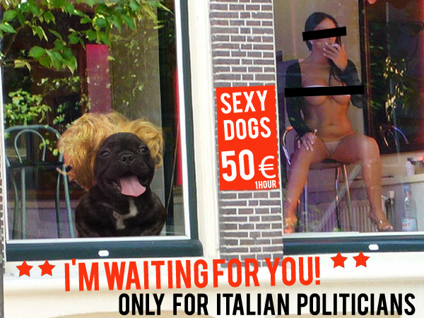 Sexy dogs -Only for Italian politicians