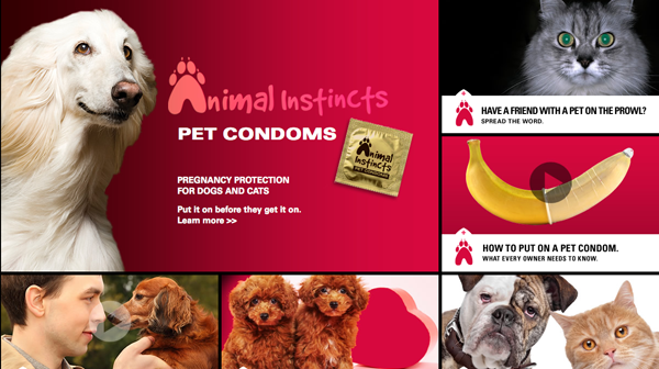 Pet Condoms - Pregnancy Protection For Pets by Animal Instincts