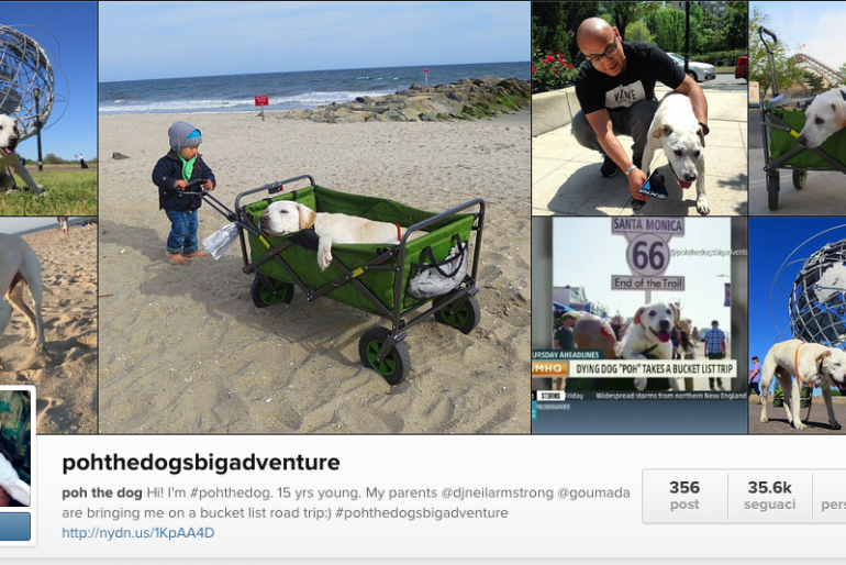 Poh the Dog travels cross-country in bid to complete bucket list – The true love story