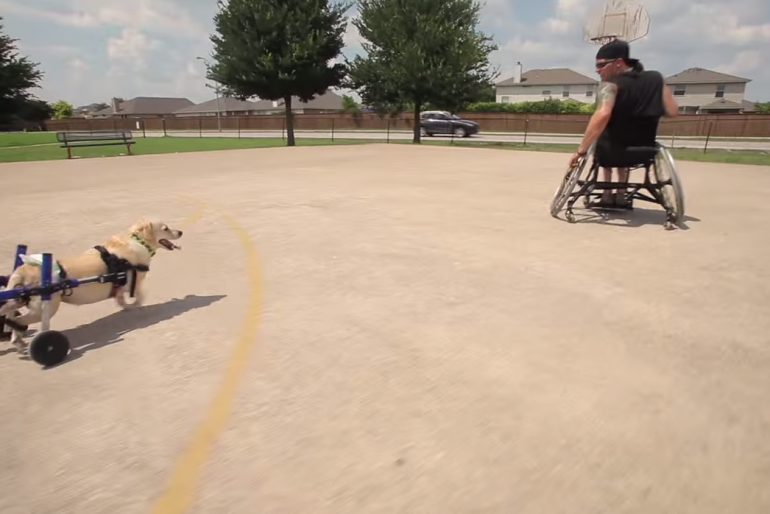 The Most Heartwarming Story of a Man and His Dog – Viral by Kleenex